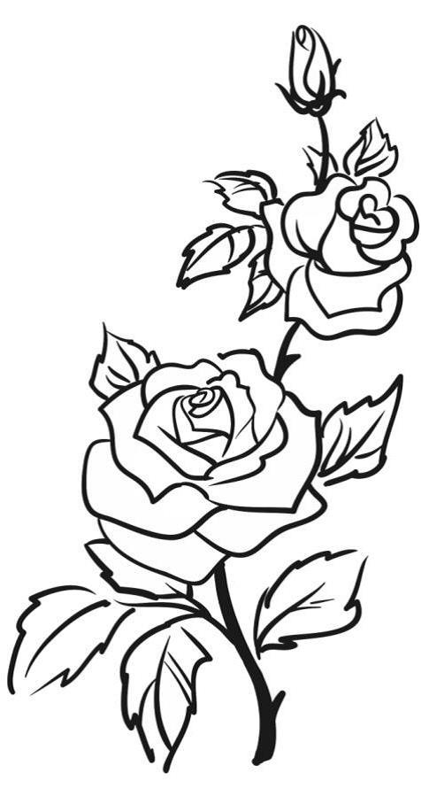 Róża Laetare