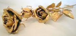 Na Nedzielę Laetare-Niedzielę Róż. Złota róża to piękno i cierpienie